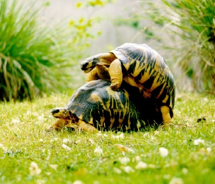Turtle Sex - THE REMIXXX!!!! - BREDE